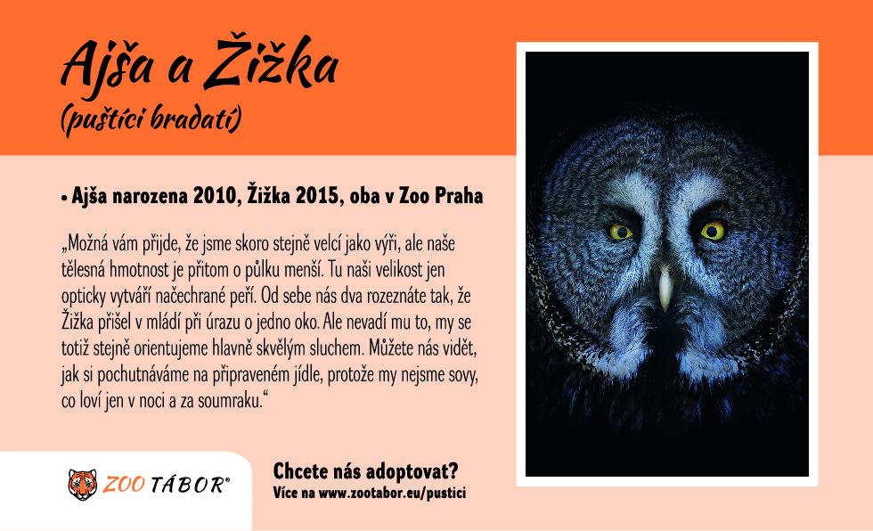 Pustik Bradaty Vousaty Zoo Tabor