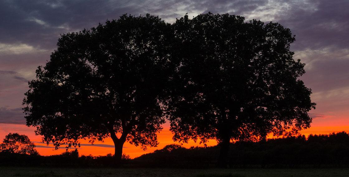 Den stromů v ZOO Tábor