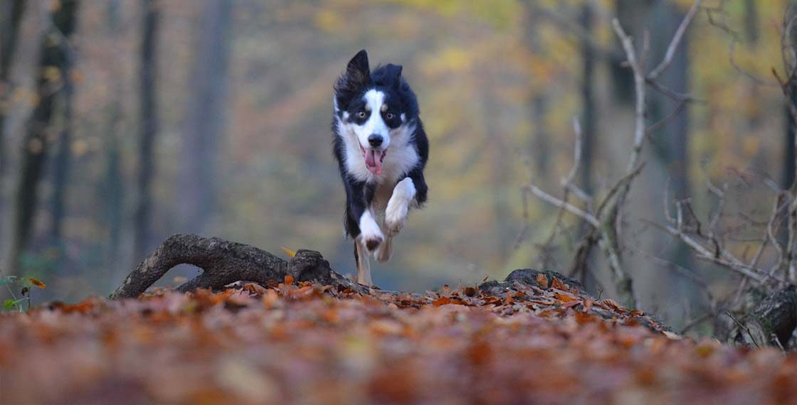 Mezinárodní den psů – soutěž o nejhezčího voříška